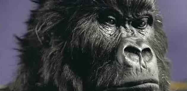 cadbury_gorilla